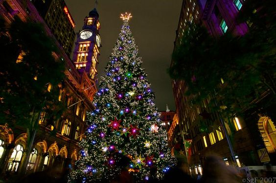 Sydney Christmas Tree Martin Place 2014 Pinterest Trees