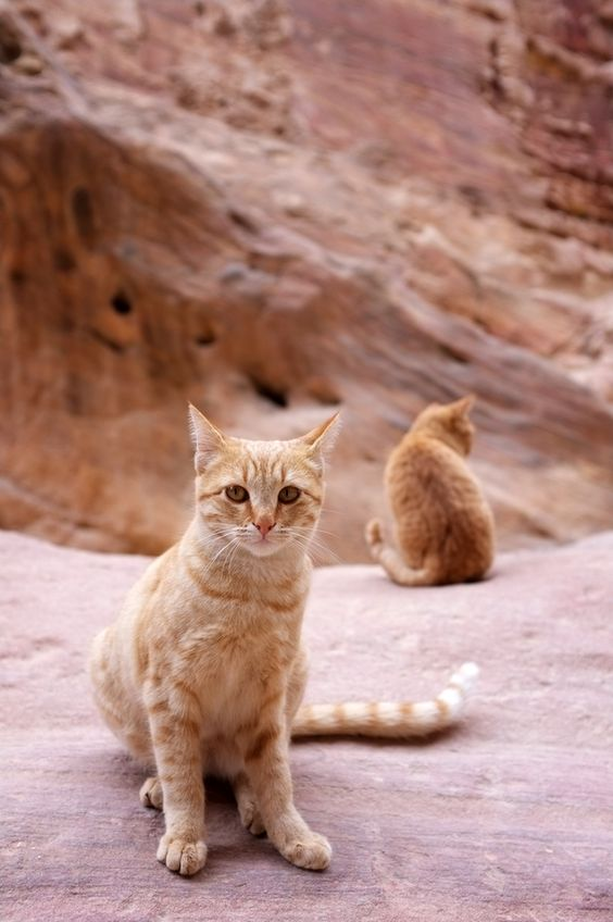 Ginger cats | Photographer: Kevin Emmanuel Ng | Source: 500px | #ginger #cats
