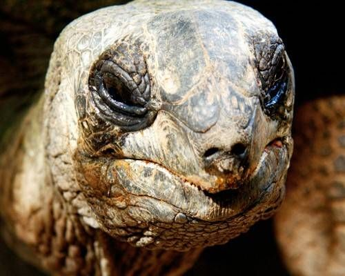 These Are The Known Oldest Living Creatures From The Elusive - Jonathan tortoise mind blowing 182 years old