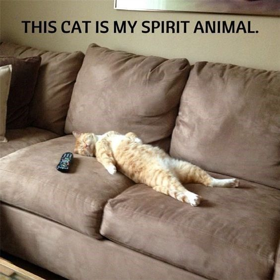 We Have Found Your Spirit Animal (22 Memes) | CutesyPooh