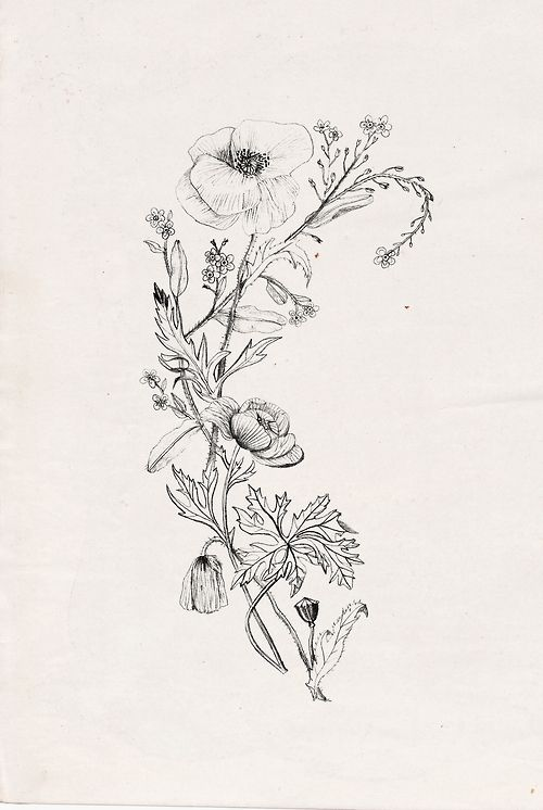 Poppy flower tattoos, Poppy flowers and Tattoos and body ...