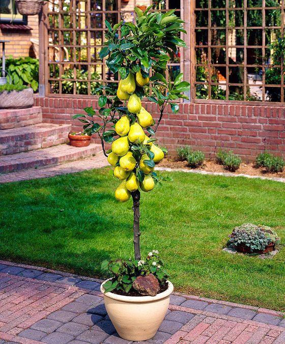 c27f185dc690040234a3c2e092716c0f - Columnar Fruit Trees For Small Gardens