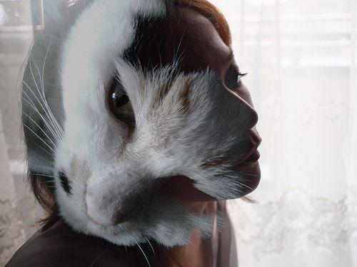 Gatto - http://invitaveritas.altervista.org/cosa-significa-sognare-un-gatto/