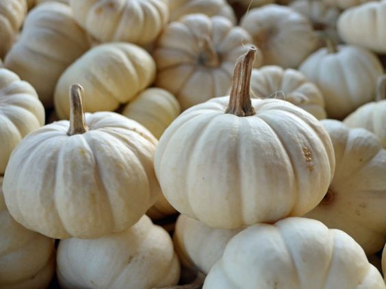 Do you like the white pumpkin trend for #Halloween? Vote now on HGTV's Design Happens blog! (http://blog.hgtv.com/design/2013/10/25/decorating-white-pumpkins-trend/?soc=pinterest)