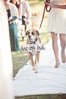 Here Comes the Bride Boxer Dog #dogs #puppy  http://www.petrashop.com/: