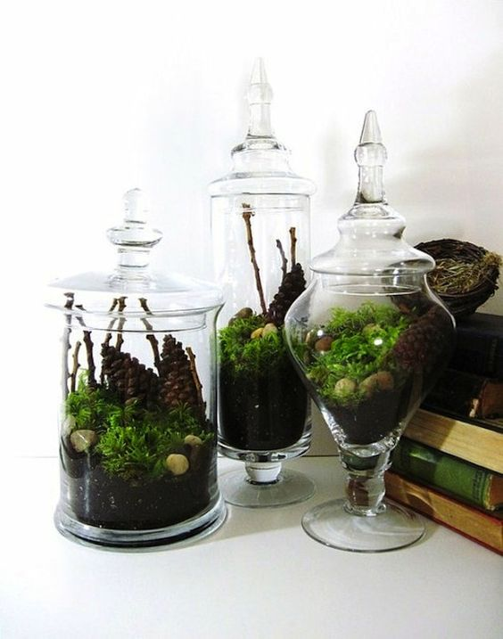 remplir quelques bocaux avec de la mousse et des foug res pour cr er des terrariums image par. Black Bedroom Furniture Sets. Home Design Ideas