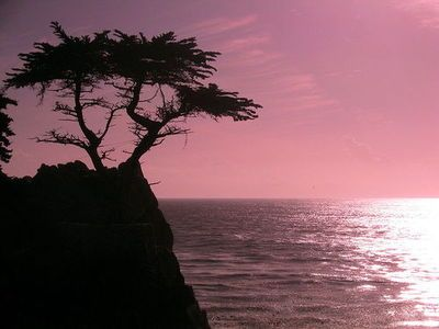 Sunset at cyprus point on pebble beach