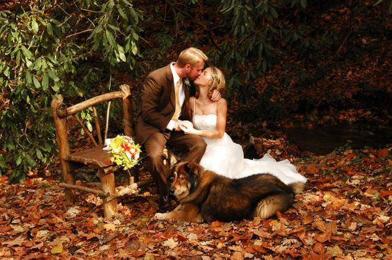 Wedding photo idea, wooden bench in the woods ground full of leaves: Engagement Pictures, Wedding Photography, Photo Ideas, Wedding Ideas, Autumn Wedding, Wedding Photos, Fall Weddings, Wedding Pictures