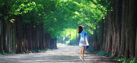 Thả hồn ở vùng đất xanh nhất Hàn Quốc