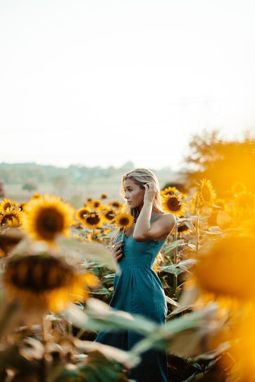 20 Sunflower Pictures Hq Download Free Images On Unsplash Sunflower Field Pictures Sunflower Photography Sunflower Field Photography
