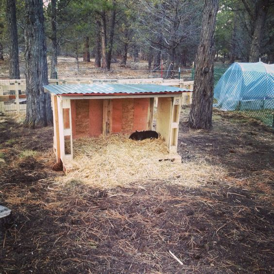 Pig Pallet Place for my American Guinea Hogs!