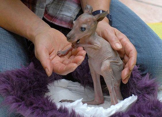 https://estilo.catracalivre.com.br/2014/06/15-fotos-de-animais-irreconheciveis-sem-pelos/