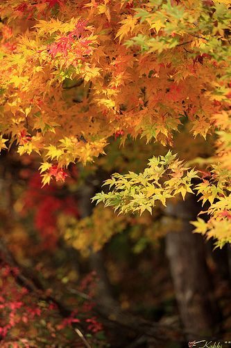 紅葉'12#20 | Flickr - Photo Sharing!