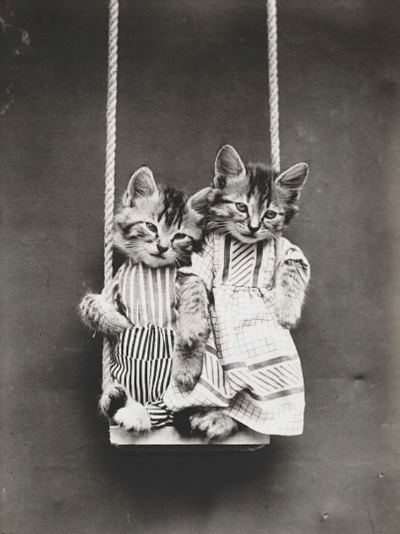 Il y a 100 ans, les premiers LOLcats de l'histoire…