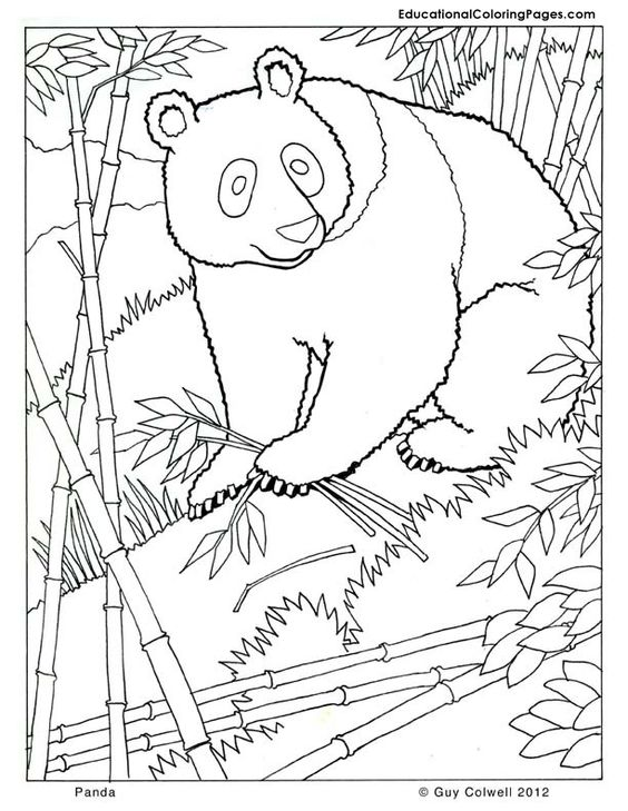 mammals coloring pages - photo#18