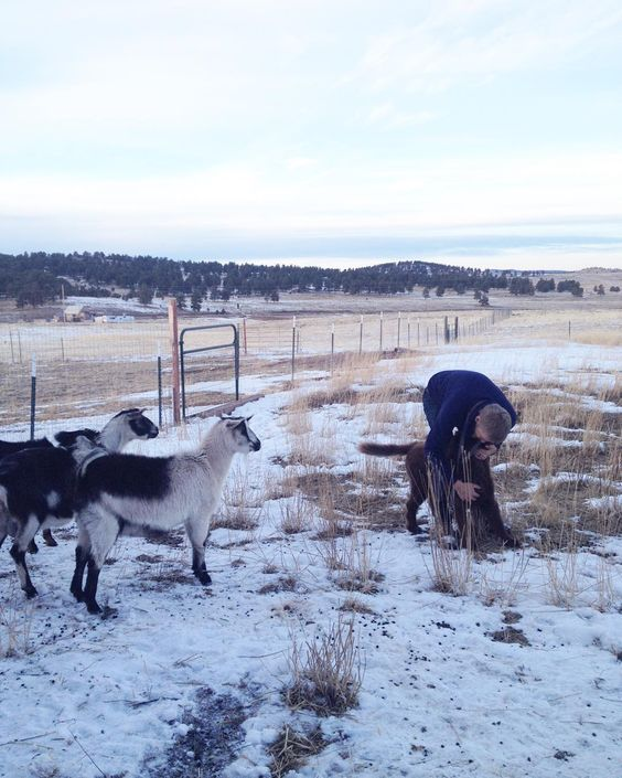 Dog sitting & neither four-legged animal knows what to do with the other  #therestoringsimplehomestead #goatsofinstagram #dogsittingadventures #coloradogram #dogstagram #farmstead http://ift.tt/1Qya3J4