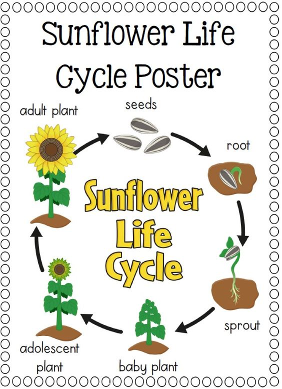 Life Cycles : Pumpkins, Ants and Life cycles