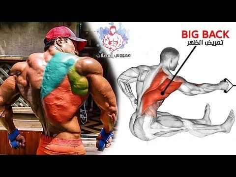 7 Ejercicios De Espalda Efectivos Para Principiantes Youtube Bodybuilding Training Workout Routine Back Workout