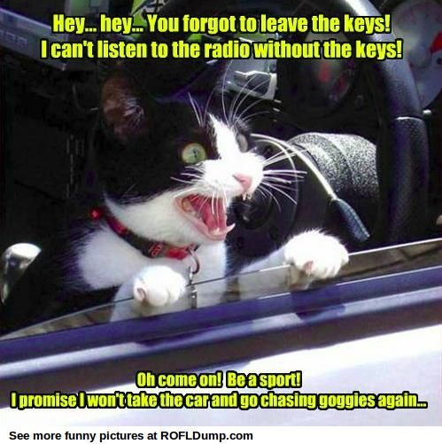 Try to let your cat alone in your car #meme #funny #lol #cat