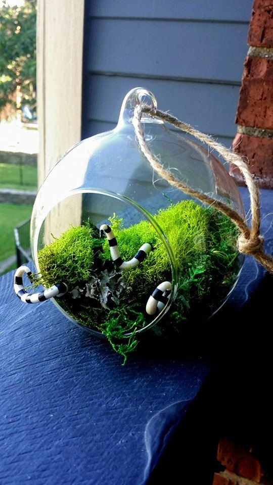 Venenoso terrario globo de cristal colgante por OctoberInferno