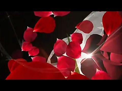 Happy Valentines Day Whatsapp Status Love Video