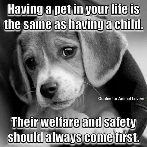 Pin By Mani Bhatia On Dog Dog Quotes Dogs Puppies Cute Dogs