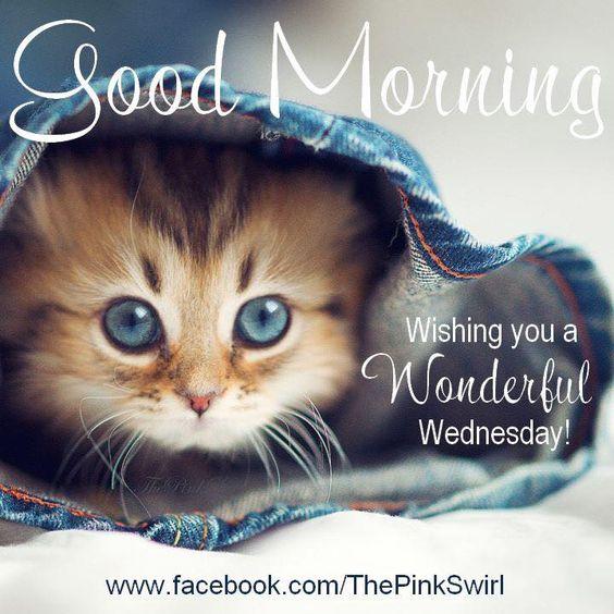 Good Morning, Wishing you a Wonderful Wednesday! #wednesday kitten cat cute