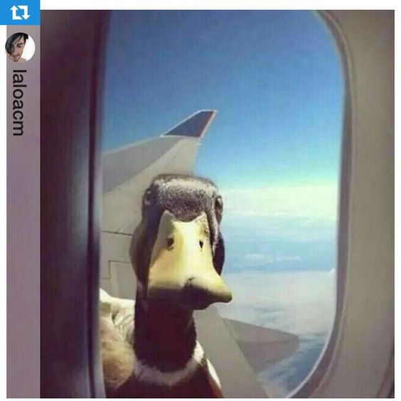 Good Morning everyone! Just had to repost this. I wonder what the caption would be... #Repost @laloacm with @repostapp.Yo