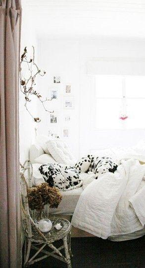 Sleepy Dalmatians