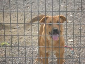 Cody is an adoptable Mastiff Dog in WALTHILL, NE. Cody is such a handsome boy and he is also a BIG guy.� Cody needs a big back yard, or an acreage of farm. He likes to run and play and spend time with...