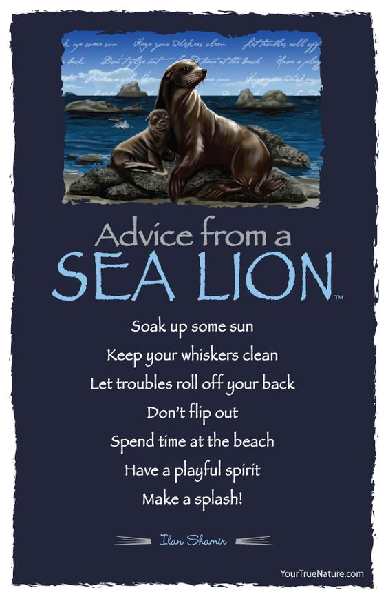 Advice from a Sea Lion - Postcard - Your True Nature