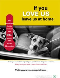 Hot Cars and Loose Pets from the AVMA. It's summertime again....leave the dog home!