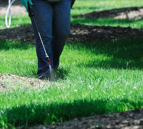 The Best Of Liquid Lawn Fertilizer List 2020 In 2020 Lawn Fertilizer Liquid Lawn Fertilizer Liquid Fertilizer