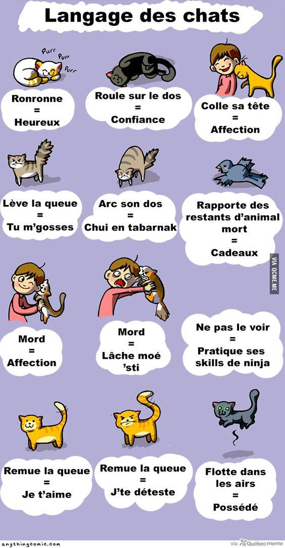 Le langage des chats – Québec Meme +