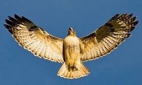 Birds of Prey Identification and Natural History Hike American Canyon, California  #Kids #Events