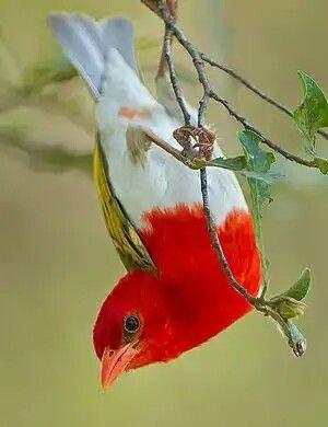 Beautiful wild bird!