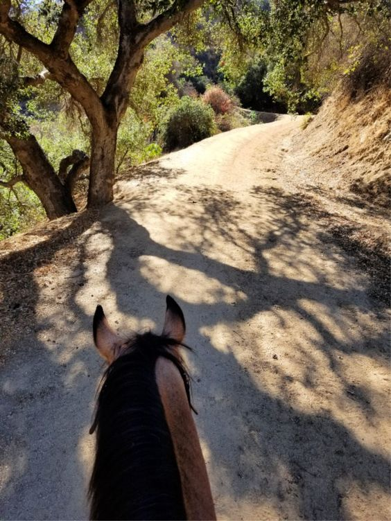 Trail Riding in Griffith Park: An Iconic Ride for Equestrians | Saddle Seeks Horse
