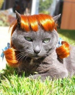 perros y gatos con pelucas