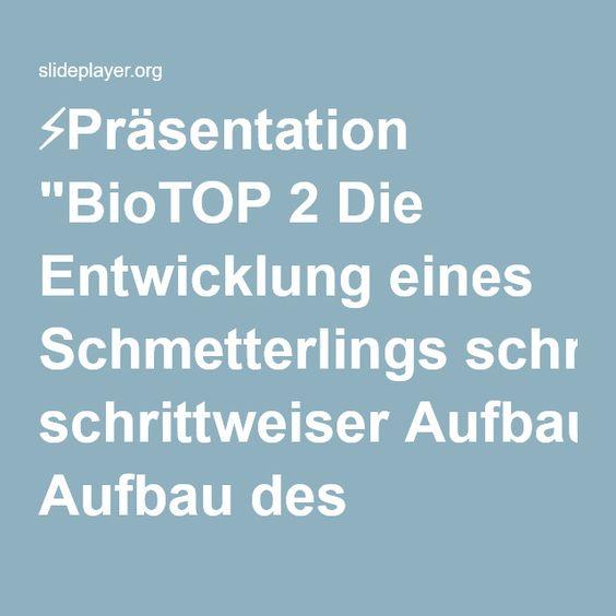 """⚡Präsentation """"BioTOP 2 Die Entwicklung eines Schmetterlings schrittweiser Aufbau des Tafelbildes vollständige Ansicht."""""""