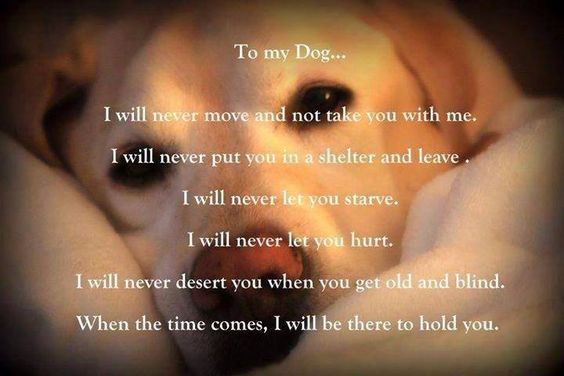 To my dogs....