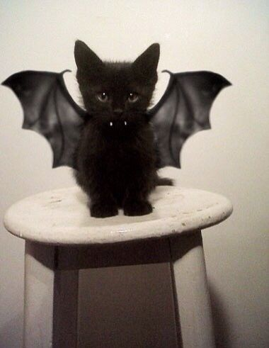 Image result for cat and dog in halloween bat wings costumes