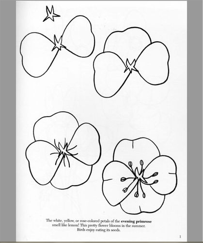 Comment dessiner un coquelicot comment dessiner for How to draw a basic flower