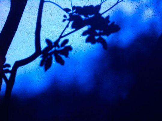 Ombres sur la maison bleue de Frida, Naomi Kawase