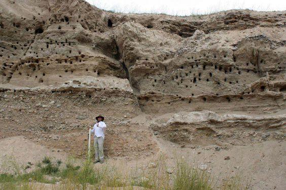 METEORIZACIÓN POR ACCIÓN BIOLÓGICA. Además de la falla que se observa en la fotografía, en la barranca o acantilado se observa gran cantidad de agujeros.