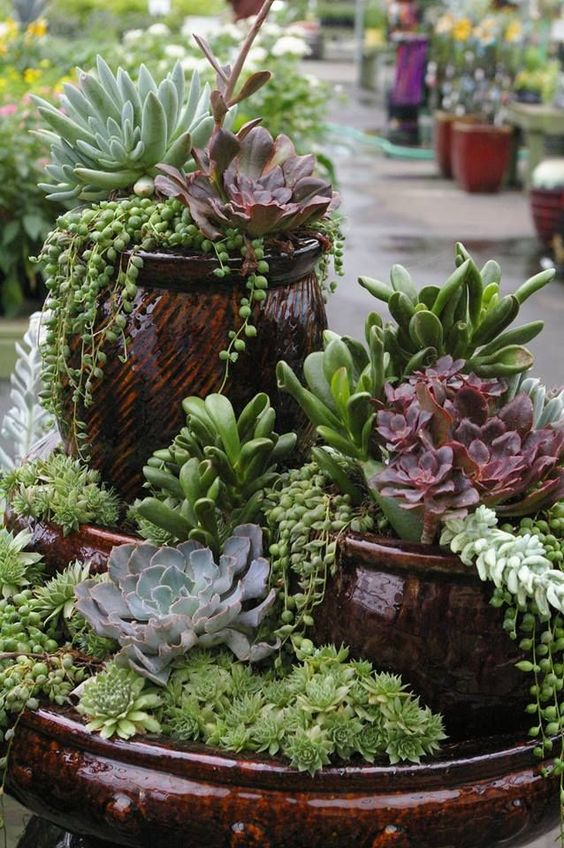 Succulents are a great low maintenance way to add for Low maintenance outdoor potted plants