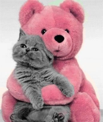 This is off the cuteness chart cute. No for real. I love pink. I love cats. I love gray cats. I just love this! Did I say love too much? Oh well. I really LOVE it! ♥♥♥