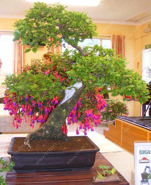 Fuchsia Bonsai : fuchsia, bonsai, Fuchsia, Seeds, Potted, Plant, Lantern, Begonia, Garden, Bonsai, Plants,, Tree,