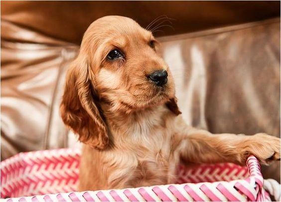 Criadero perros Sincelejo gatos en venta cachorros sincelejo ...