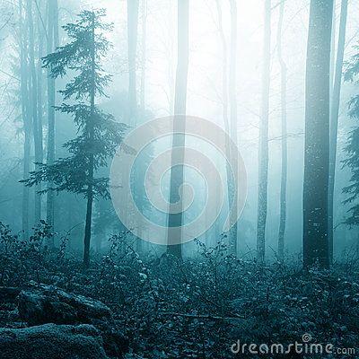 Forêt lumineuse brumeuse de couleur bleue d imagination