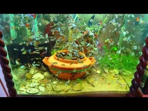 Ideasaquarium Tanksaquarium Decoration Childrenaquarium Plantsfish Diyfish Goldfish Aquariumfreshwater Aquariumfish Tank Wallpaper Bể Ca Ca Bảy Mau